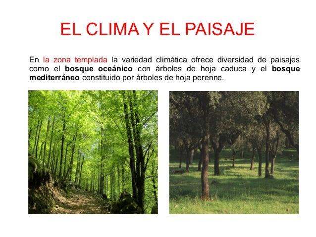 El clima for Arboles de hoja perenne para clima continental