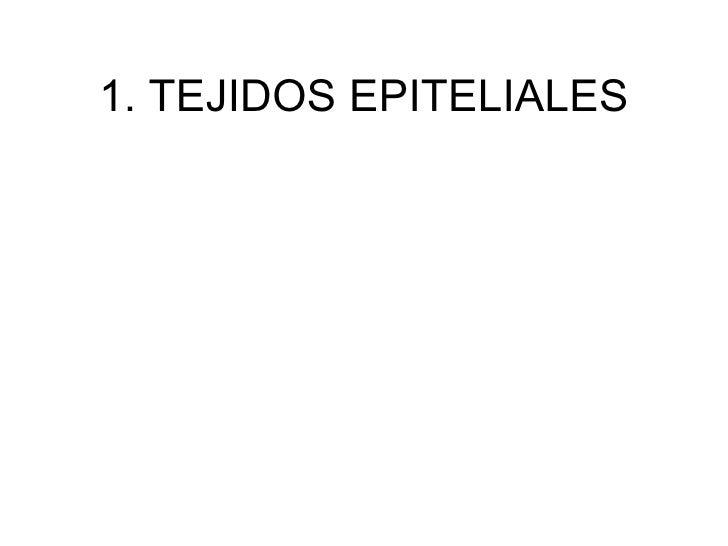 1. TEJIDOS EPITELIALES