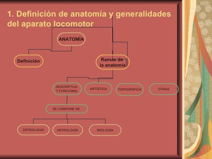 Presentación tema 1 anatomía estíbaliz