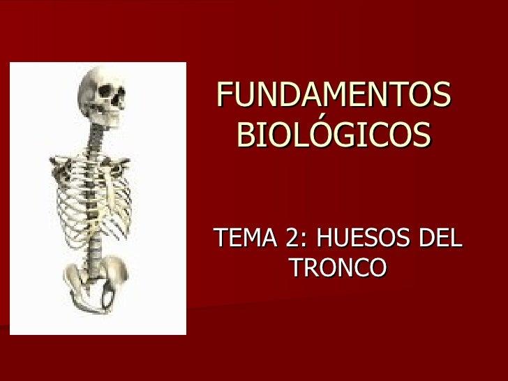 FUNDAMENTOS BIOLÓGICOS TEMA 2: HUESOS DEL TRONCO