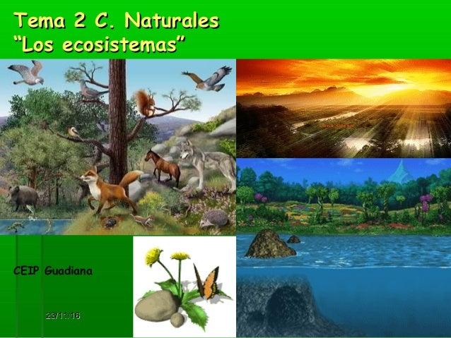 """23/11/1623/11/16 11 Tema 2 C. NaturalesTema 2 C. Naturales """"Los ecosistemas""""""""Los ecosistemas"""" CEIP Guadiana"""