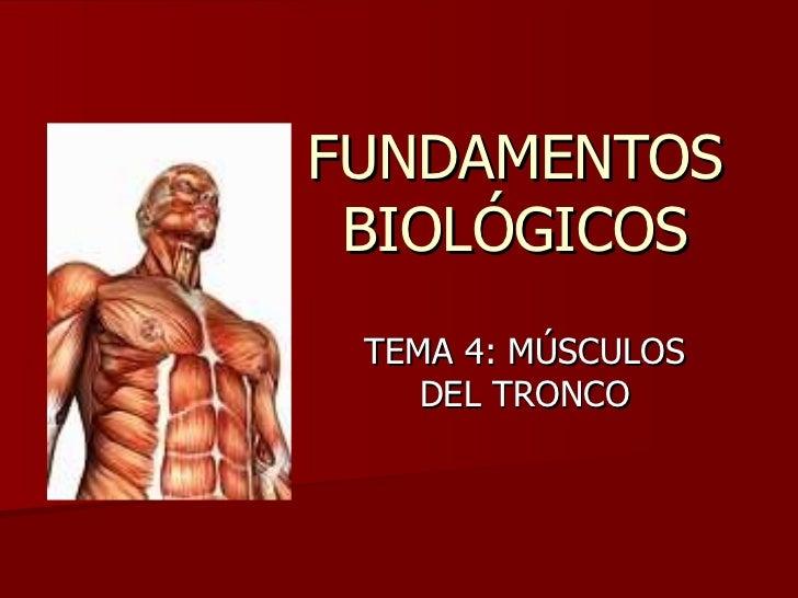 FUNDAMENTOS BIOLÓGICOS TEMA 4: MÚSCULOS DEL TRONCO