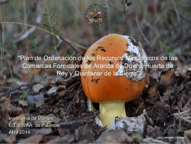 """""""Plan de Ordenación de los Recursos Micológicos de las Comarcas Forestales de Aranda de Duero, Huerta de Rey y Quintanar d..."""