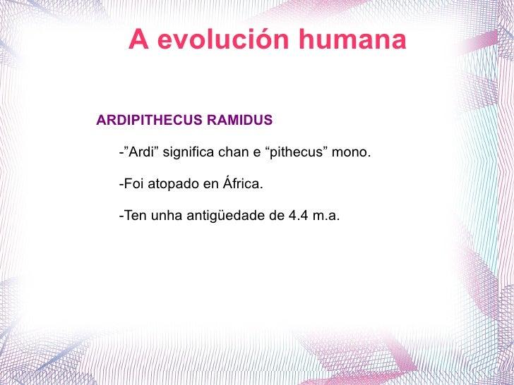 """A evolución humana ARDIPITHECUS RAMIDUS -""""Ardi"""" significa chan e """"pithecus"""" mono. -Foi atopado en África. -Ten unha antigü..."""