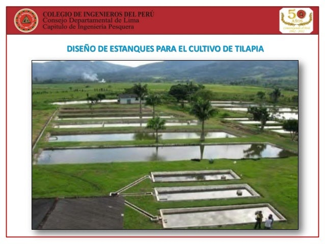 Curso cultivo de tilapia for Estanques para peces en tierra