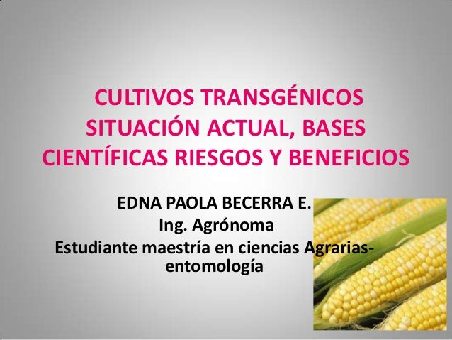 CULTIVOS TRANSGÉNICOS    SITUACIÓN ACTUAL, BASESCIENTÍFICAS RIESGOS Y BENEFICIOS         EDNA PAOLA BECERRA E.            ...