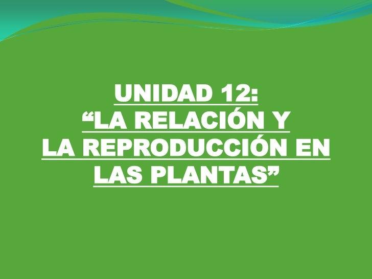 """UNIDAD 12:   """"LA RELACIÓN YLA REPRODUCCIÓN EN    LAS PLANTAS"""""""
