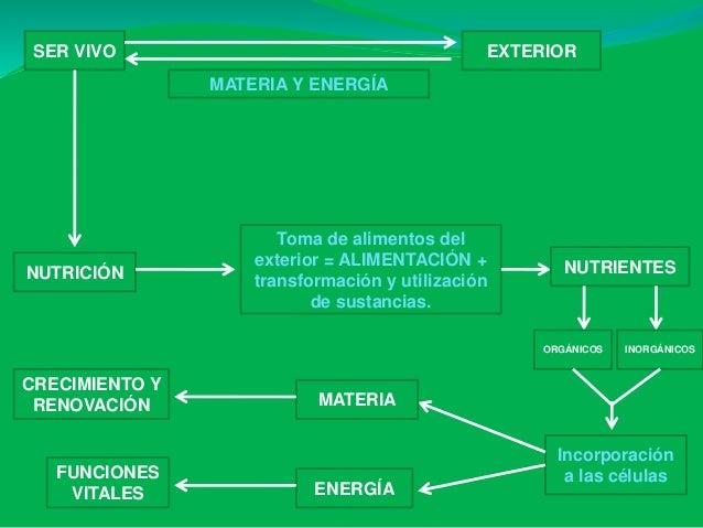 Presentación ud 5 ap.digestivo b1 b Slide 2