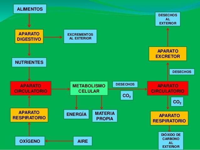 Presentación ud 5 ap.digestivo b1 b Slide 3