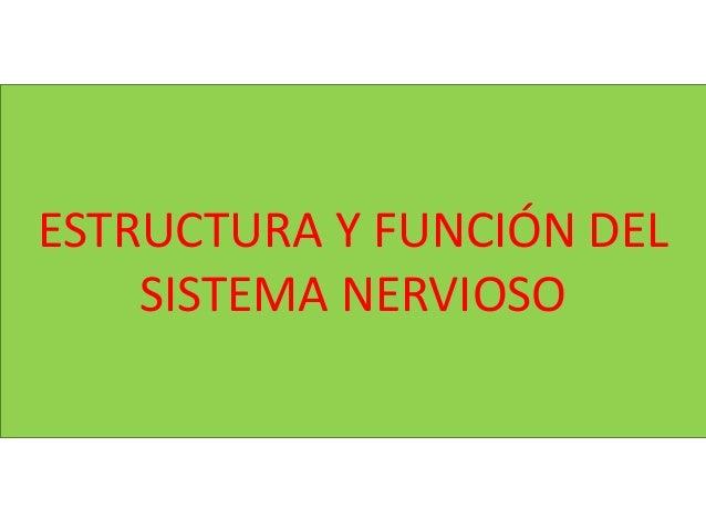 ESTRUCTURA Y FUNCI�N DEL SISTEMA NERVIOSO