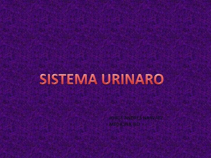 SISTEMA URINARO<br />JORGE ANDRES NARVAEZ<br />MEDICINA IIID<br />