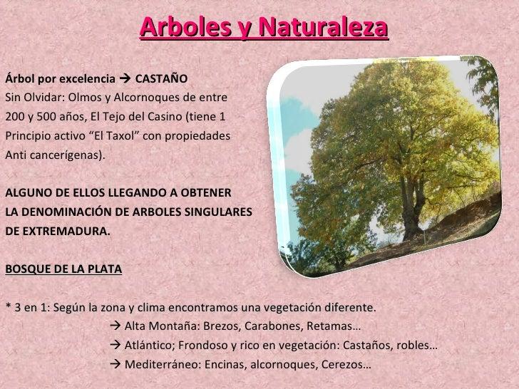 Arboles y Naturaleza Árbol por excelencia    CASTAÑO Sin Olvidar: Olmos y Alcornoques de entre 200 y 500 años, El Tejo de...