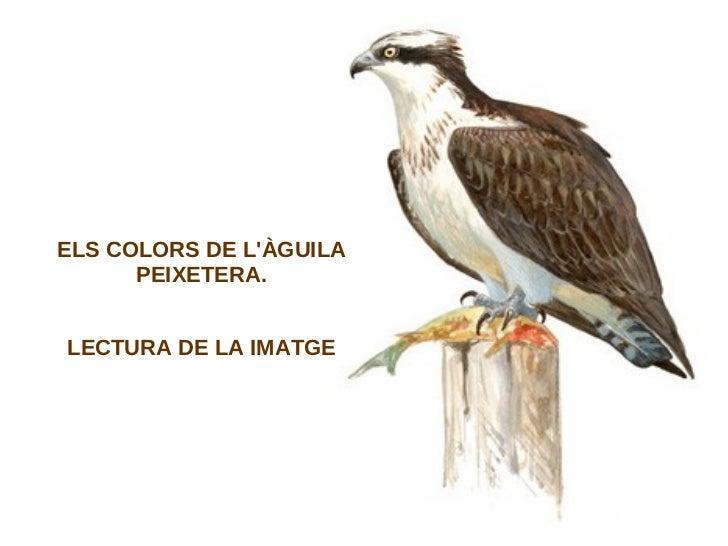 ELS COLORS DE LÀGUILA      PEIXETERA.LECTURA DE LA IMATGE