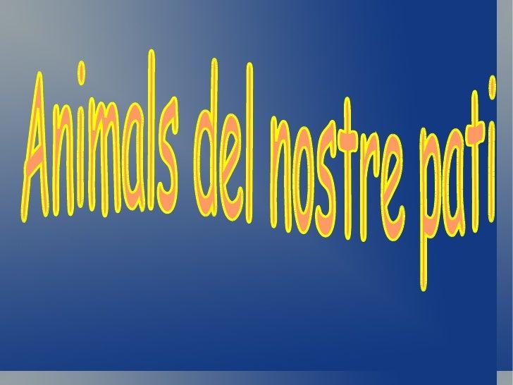 CHRYSOPERLA CARNEA                              Fet per :                                                  ISAAC          ...