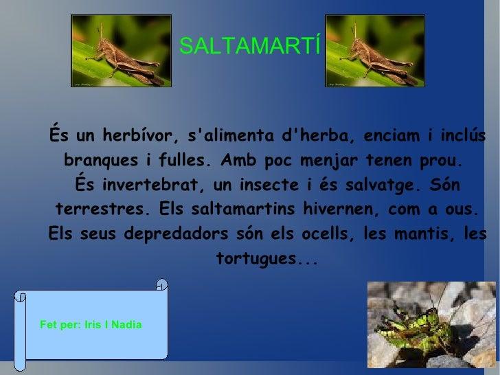 EspiadimonisMenja animals aquàtics i petits, els espiadimonis sóninvertebrats . Posa els ous a les basses naturals, Els se...