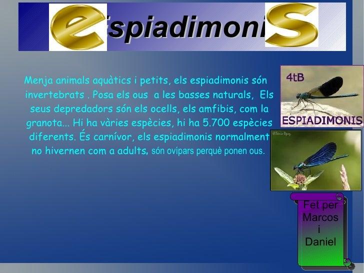 NO PARLAR                              La sargantana és un rèptil                              insectívor que no està en  ...