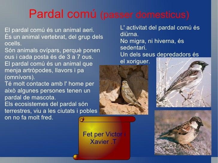 CUERETA BLANCALa Cuereta Blanca, el seu nom científic ésMotacilla Alba. També la Cuereta Blanca ésvertebrat del grup dels ...