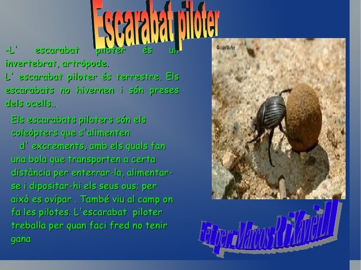 PAPALLONESSón herbívores , salimenten normalment de pol·len .Són salvatges i invertebrades, insectes.  Són aèries, hi ha p...