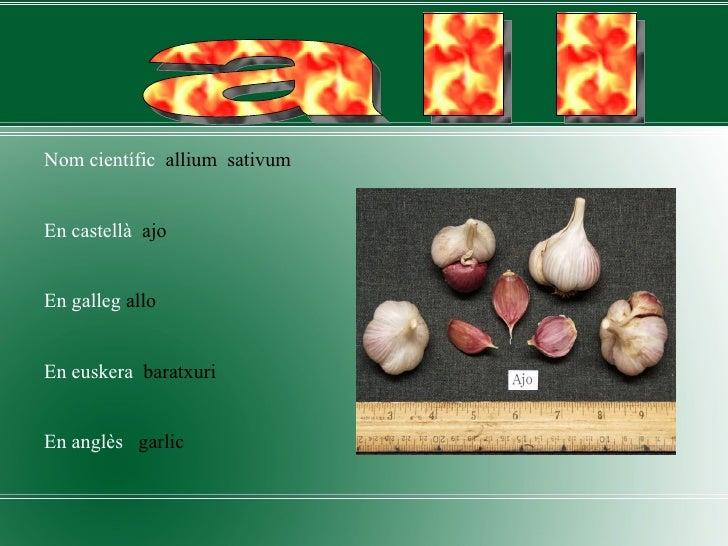 <ul><li>Nom científic   allium  sativum