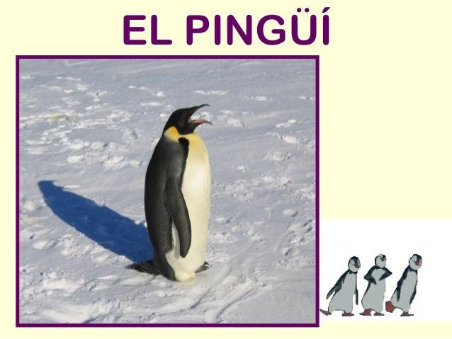 EL PINGÜÍ