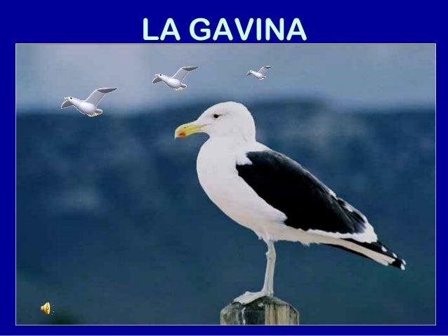 LA GAVINA