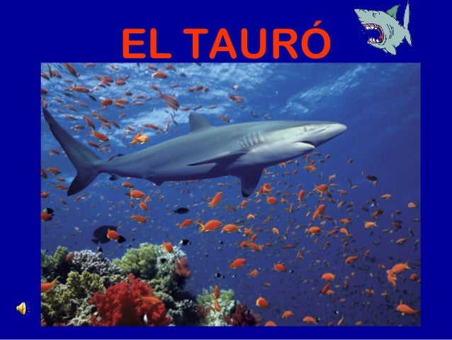 EL TAURÓ
