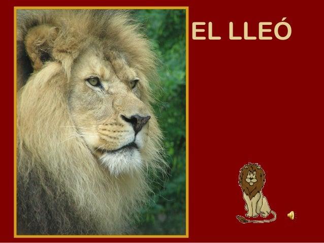 EL LLEÓLleo.wav