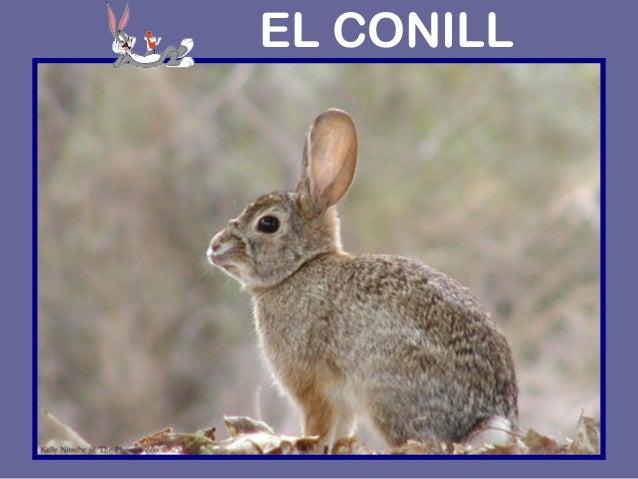 EL CONILL