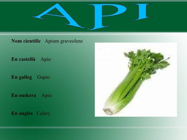<ul><li>Nom científic   Apium graveolens