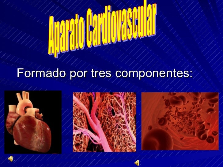 Formado por tres componentes: Aparato Cardiovascular