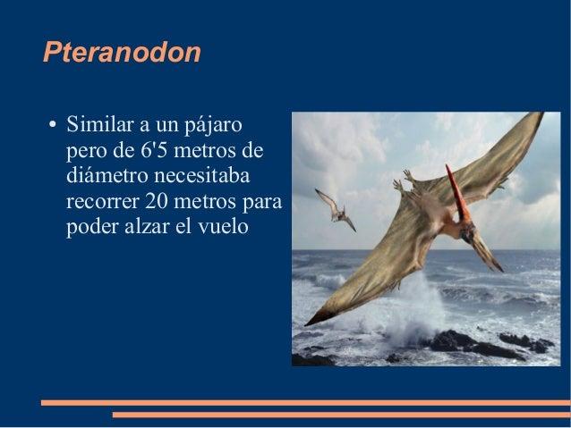 Pteranodon● Similar a un pájaropero de 65 metros dediámetro necesitabarecorrer 20 metros parapoder alzar el vuelo