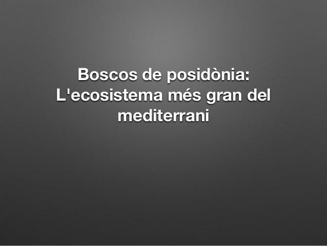 Boscos de posidònia:  L'ecosistema més gran del  mediterrani