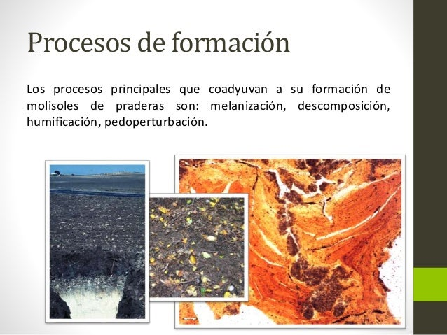 Suelos del orden molisol for Proceso de formacion del suelo