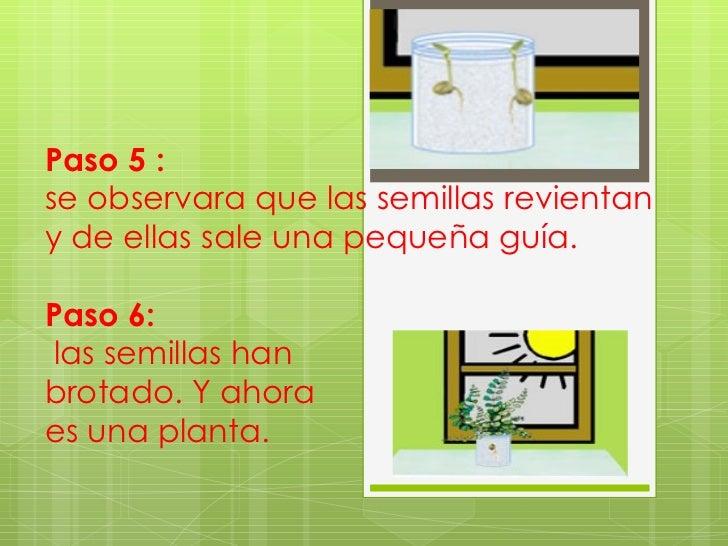 Presentacion com nacen las plantas yolanda rodriguez for Pasos para sembrar una planta