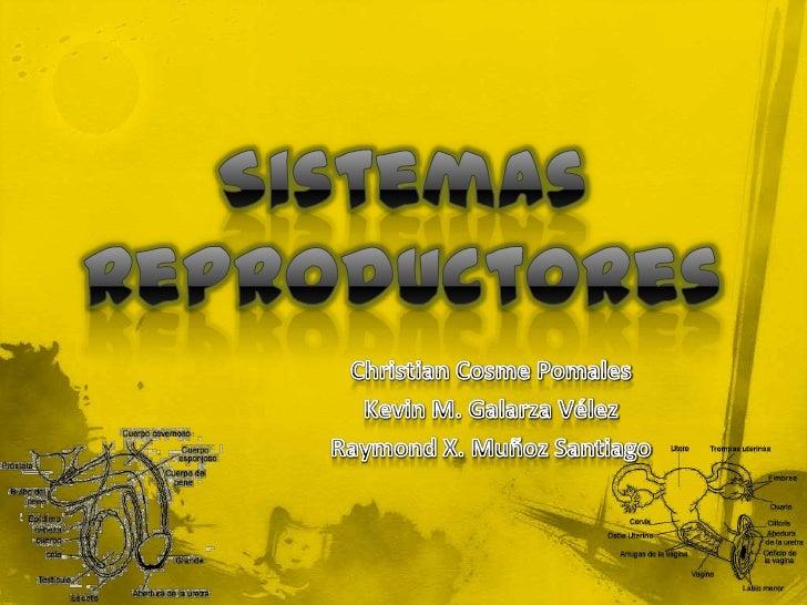 Sistemas Reproductores<br />Christian Cosme Pomales<br />Kevin M. Galarza Vélez<br />Raymond X. Muñoz Santiago<br />