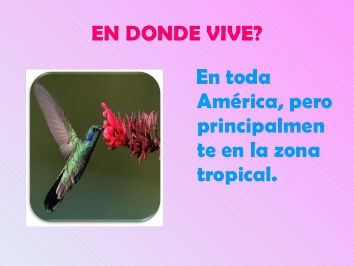 Presentacion de colibri - Donde viven los acaros ...
