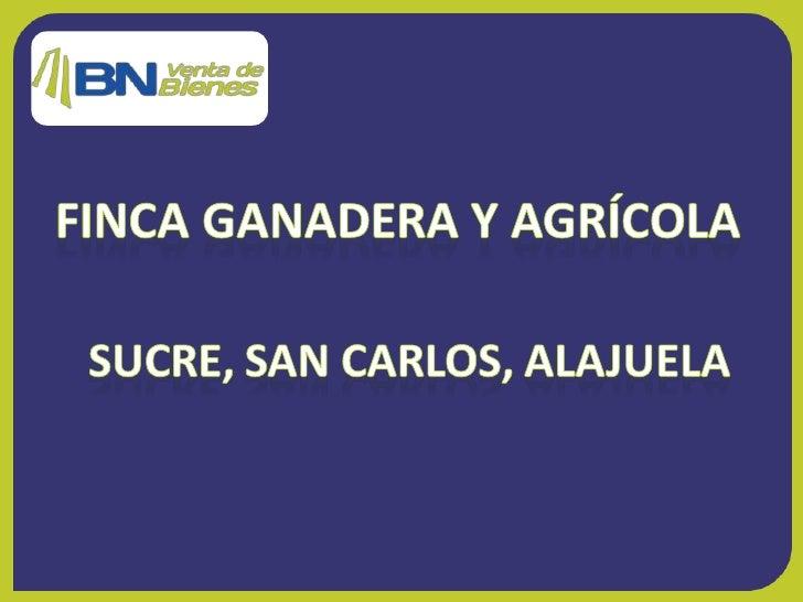 Alajuela, San Carlos, Ciudad Quesada, de la guardia rural segunda entrada hacia Ciudad Quesada y 1,5 Km. Ultima finca al f...