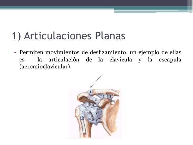 Articulaciones, músculos y huesos