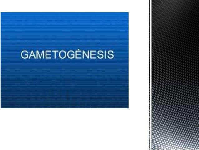  Todas las células reproductoras o gametos se originan por meiosis. Sin embargo, cada tipo de gameto, masculino o femenin...
