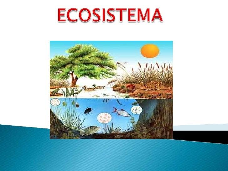 ECOSISTEMA<br />