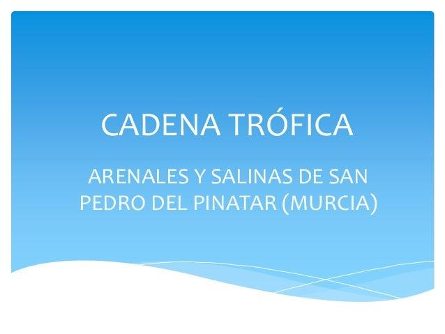 CADENA TRÓFICA ARENALES Y SALINAS DE SAN PEDRO DEL PINATAR (MURCIA)