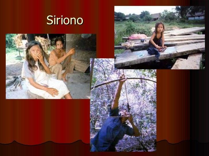 Siriono