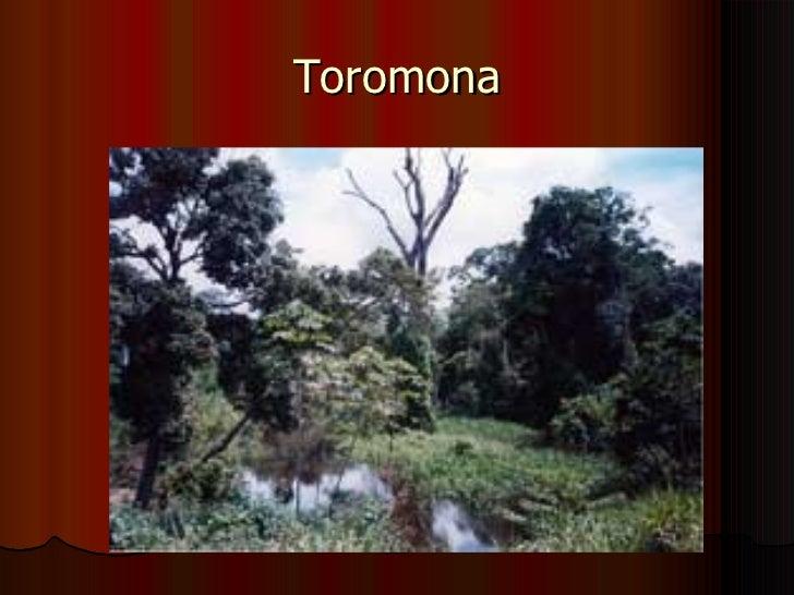 Toromona