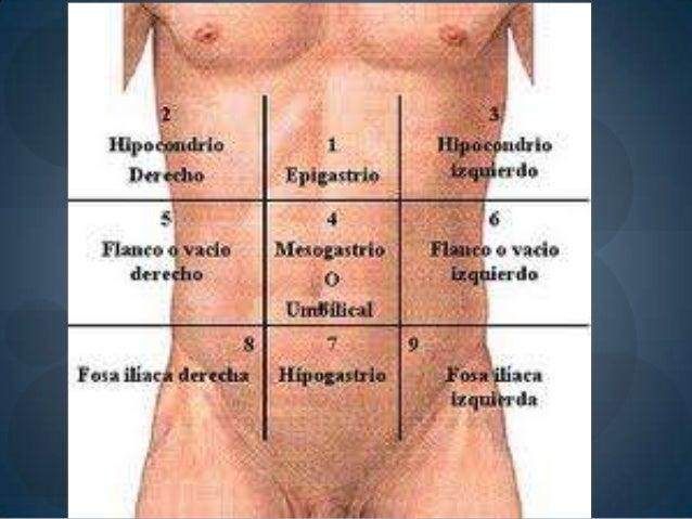 Músculos del abdomen. según sinelnikov I. Andrews Ramos Vicente.