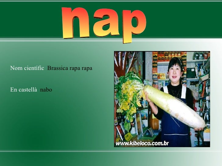 <ul><li>Nom científic  Brassica rapa rapa