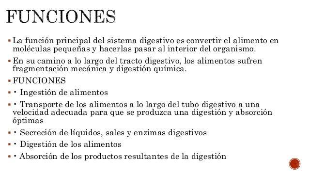Presentacion aparato digestivo Agustin Caza