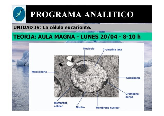 PROGRAMA ANALITICO UNIDAD IV: La célula eucarionte. TEORIA: AULA MAGNA - LUNES 20/04 - 8-10 h