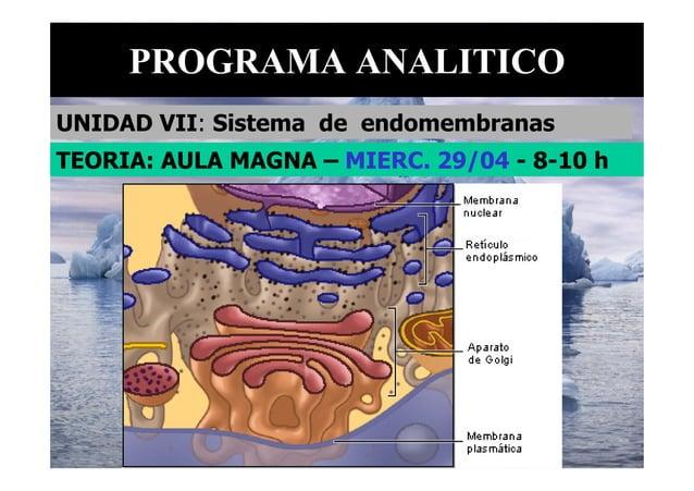 PROGRAMA ANALITICO UNIDAD VII: Sistema de endomembranas TEORIA: AULA MAGNA – MIERC. 29/04 - 8-10 h