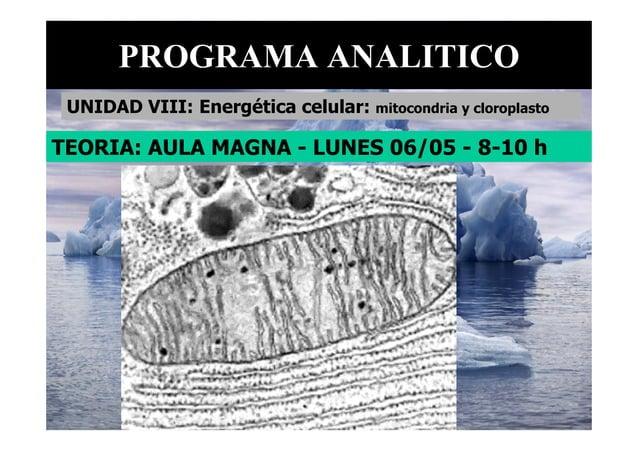 TEORIA: AULA MAGNA - LUNES 06/05 - 8-10 h PROGRAMA ANALITICO UNIDAD VIII: Energética celular: mitocondria y cloroplasto