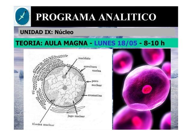 PROGRAMA ANALITICO UNIDAD IX: Núcleo TEORIA: AULA MAGNA - LUNES 18/05 - 8-10 h